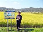 Điểm sáng từ cánh đồng mẫu trồng lúa hữu cơ U Minh hạ