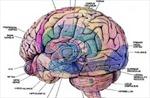Giải mã thành công quá trình xử lý thông tin của não bộ