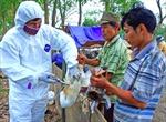 Khẩn trương dập dịch cúm gia cầm