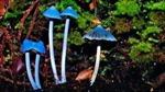 Những loài nấm kỳ lạ