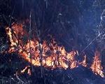 Vụ cháy rừng Hoàng Liên: Nỗ lực dập lửa, không cho lan vào rừng già