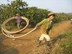 Bão số 1 làm lợi lớn cho Đắk Lắk