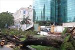 Hàng trăm cây xanh ở TPHCM bị bão tàn phá