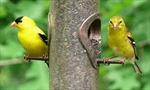 Những loài chim sặc sỡ