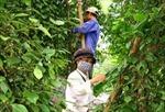 Nhân rộng các mô hình sản xuất nông nghiệp hiệu quả