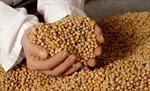 Áchentina tăng xuất khẩu nông sản sang Việt Nam