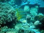 Đến Nha Trang khám phá lòng biển Hòn Mun