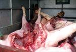 Nam Định công bố dập xong dịch lợn tai xanh