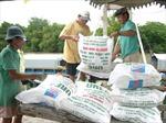 Giá phân bón có thể giảm 500 đồng/kg
