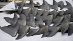 Trung Quốc sẽ cấm quan chức ăn vây cá mập