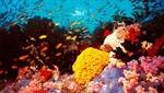 Thúc đẩy hành động toàn cầu bảo vệ rặng san hô
