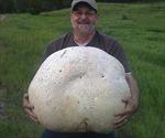 Choáng với cây nấm nặng tới 26 kg