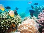 San hô toàn cầu kêu cứu