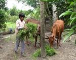 Vĩnh Long giảm nghèo bền vững trong đồng bào dân tộc