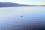 Công bố ảnh 'quái vật hồ Loch Ness'