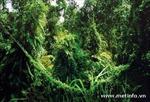 Phát hiện động, thực vật quý hiếm tại Vườn Quốc gia Phú Quốc