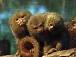 'Báu vật' rừng nhiệt đới Nam Mỹ