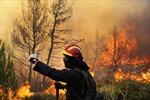 Cháy rừng, ngoại ô Athens ngập khói bụi