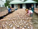 Hiệu quả mô hình liên kết nuôi, chế biến cá lóc