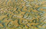 Những hình ảnh ấn tượng vùng đất ngập mặn ở Anh