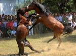Độc đáo chọi ngựa ở Trung Quốc