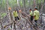 Những khuất tất đằng sau vụ khai thác 26 ha rừng đước