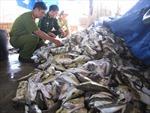 Quảng Ngãi: Tiêu hủy 4,3 tấn cá nóc