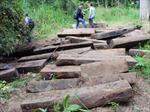 Lại phát hiện gỗ quý dưới sông Sêrêpốk