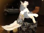 Video: Mèo chuyển điện thoại, cưa sắt vào tù