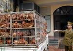 Lạng Sơn bắt giữ vụ vận chuyển gà không rõ nguồn gốc