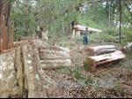 Gia Lai: Kỷ luật nhiều cán bộ xã Ia Kreng và huyện Chư Pah do để lâm tặc phá rừng