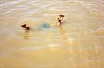 Đồng Nai: Người đàn ông tử vong vì đuối nước ở suối Săn Máu