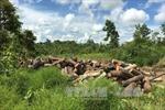 Kiểm tra, làm rõ vụ khai thác 8 ha rừng ở xã An Sinh