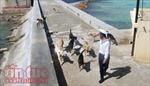 Những chú chó ở Trường Sa, 'người bạn' thân thiết của lính đảo