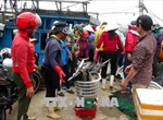 Ngư dân Quảng Trị có Tết an vui