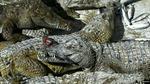 Tổng thống Philippines dọa ném các điều tra viên LHQ cho cá sấu ăn thịt