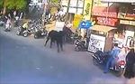 'Bò điên' húc người phụ nữ đi bộ trên phố văng xa 3 mét