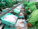 Doanh nghiệp xuất khẩu cá tra-basa Việt Nam vẫn bị áp dụng mức thuế chống bán phá giá rất cao