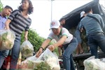 Vụ củ cải Tráng Việt phải 'giải cứu': Thiếu sự liên kết giữa sản xuất và tiêu thụ