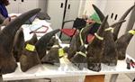 13 tháng tù cho 'đầu sỏ' buôn lậu sừng tê giác: Chưa thích đáng