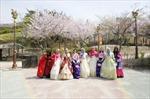 'Mùa hoa nở' - sản phẩm du lịch có tính cạnh tranh cao của Hàn Quốc
