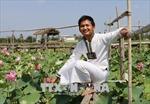 Chàng trai dân tộc Chăm cải tạo ruộng bùn sình thành cánh đồng hoa sen bát ngát
