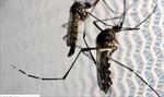 Trung Quốc sử dụng công nghệ radar quân sự vào cuộc chiến chống muỗi