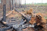 Đắk Nông tạm giữ khẩn cấp một phó Trạm quản lý – bảo vệ rừng