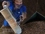 Xử lý nghiêm cơ sở nhuộm đen cà phê bằng bột pin