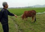 Thanh Hóa yêu cầu hoàn trả tiền thu phí đồng cỏ trước 30/4