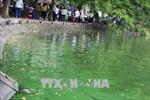 Xuất hiện váng xanh nghi tảo độc tại hồ Hoàn Kiếm