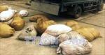 Bắt quả tang vụ vận chuyển 850 kg bì lợn thối trên đường đi tiêu thụ