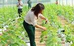 'Đất thép' Củ Chi vươn mình trở thành vùng nông nghiệp chất lượng cao