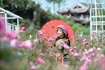 Khám phá xứ sở hoa hồng đẹp mê mải tại Sun World Fansipan Legend